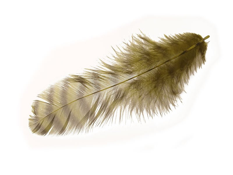 Image of   Grizzly soft hackle olive