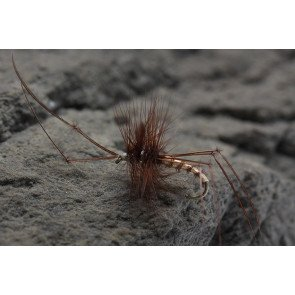 UF Daddy Long Legs TAN/BRN size: 12