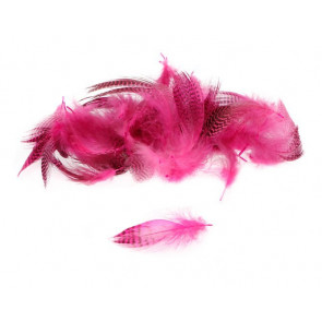 Teal Flank Feather - Hot Pink